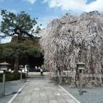 千本釈迦堂 4月2日
