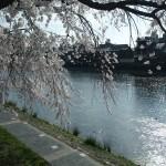 鴨川 4月2日