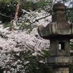 御香宮神社 4月2日