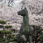 乃木神社 4月2日