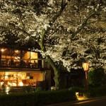 高瀬川 ライトアップ 4月2日