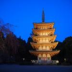 醍醐寺 ライトアップ 4月