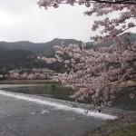 大堰川 4月3日