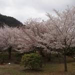 嵐山公園 4月3日