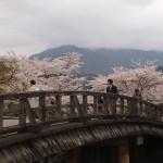 中ノ島橋 4月3日