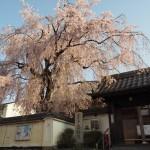 恵福寺 4月