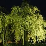 中ノ島公園 4月3日