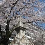壬生寺 4月3日