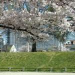 西寺跡 4月3日