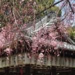 綾戸国中神社 4月3日