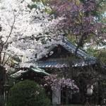 神足神社 4月3日