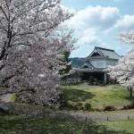 勝竜寺城公園 4月3日