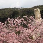 霊山観音 4月