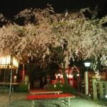 水火天満宮 ライトアップ 4月3日