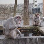 猿の出現 4月