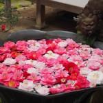 法然院 椿の手水鉢