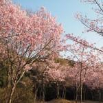 熊野若王子神社 4月