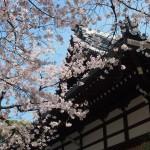 本満寺 4月4日