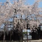 妙覚寺 4月4日