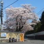 東福寺 4月4日