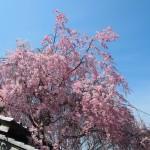 東福寺 光明院 4月4日