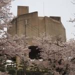 松ヶ崎疏水(浄水場) 4月4日