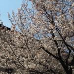 京都府庁旧本館 4月