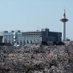 京都タワーと桜
