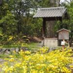 京都御苑 県井 4月