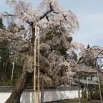 醍醐寺 4月