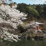 醍醐寺 伽藍