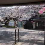笠置駅 4月5日
