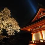 清水寺 田村堂と桜
