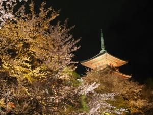 清水寺 桜の夜間拝観