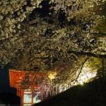 清水寺 仁王門と桜