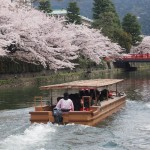 琵琶湖疏水 4月5日