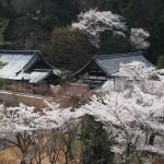 南禅寺 三門からの桜
