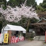 熊野若王子神社 4月5日