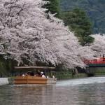 琵琶湖疏水 十石船 4月5日