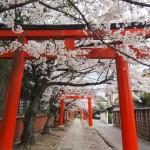 竹中稲荷神社 4月5日