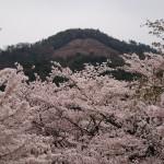 銀閣寺道 桜越しの大文字