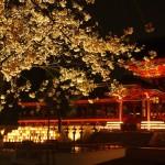 石清水八幡宮 ライトアップ 4月5日