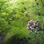 東福寺の新緑と石楠花