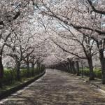 亀岡 和らぎの道