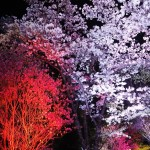神童寺 ライトアップ