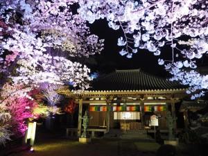 神童寺 ライトアップ 4月