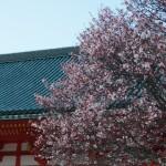 平安神宮 4月6日