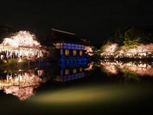 平安神宮 ライトアップ