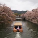 桜が散った疏水 4月7日