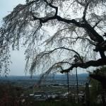 地蔵禅院 4月7日